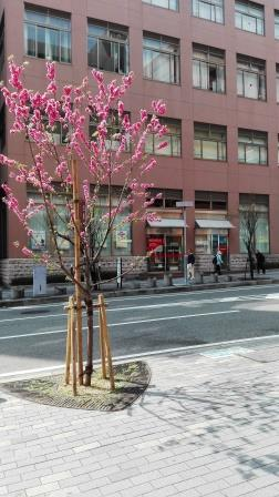 神戸の行政書士山田事務所の建物前.jpg