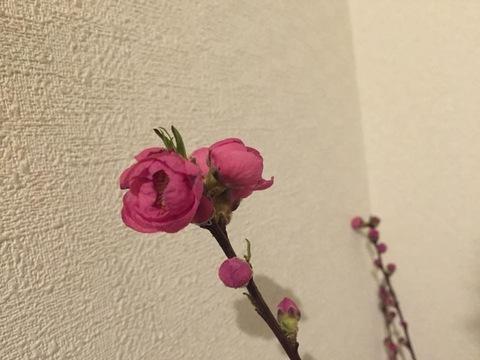 blogIMG_8968.jpg