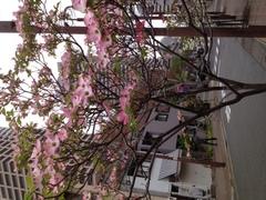花水木の花が咲きました。