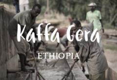 エチオピア産の珍しいコーヒー豆